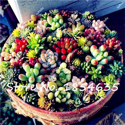 100Pcs Office Desktop Flowers, Mini Succulents Seeds, Indoor Bonsai Seeds, Anti-radiation Computer,Potted Plants Purify the Air  UpCube- upcube