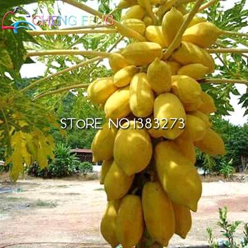 100pcs Delicious Organic Jackfruit Seeds Nutritious Fruit Seeds For Home & Garden Free Shipping
