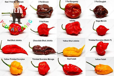 100pcs Worlds Hottest Pepper Seeds World Hottest Pepper 16 Kinds Of Rare Chili Pepper Seeds Home Garden Bonsai Seeds  UpCube- upcube