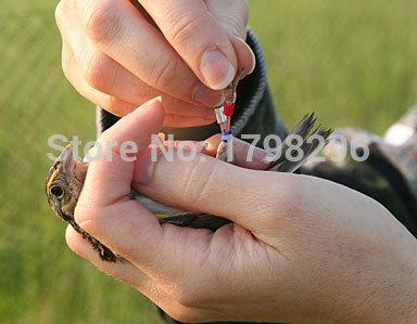 100%Nylon Material Free Shipment Bird Banding Department Remmend Mist Bird Capture Net 19x4m mesh:19mm