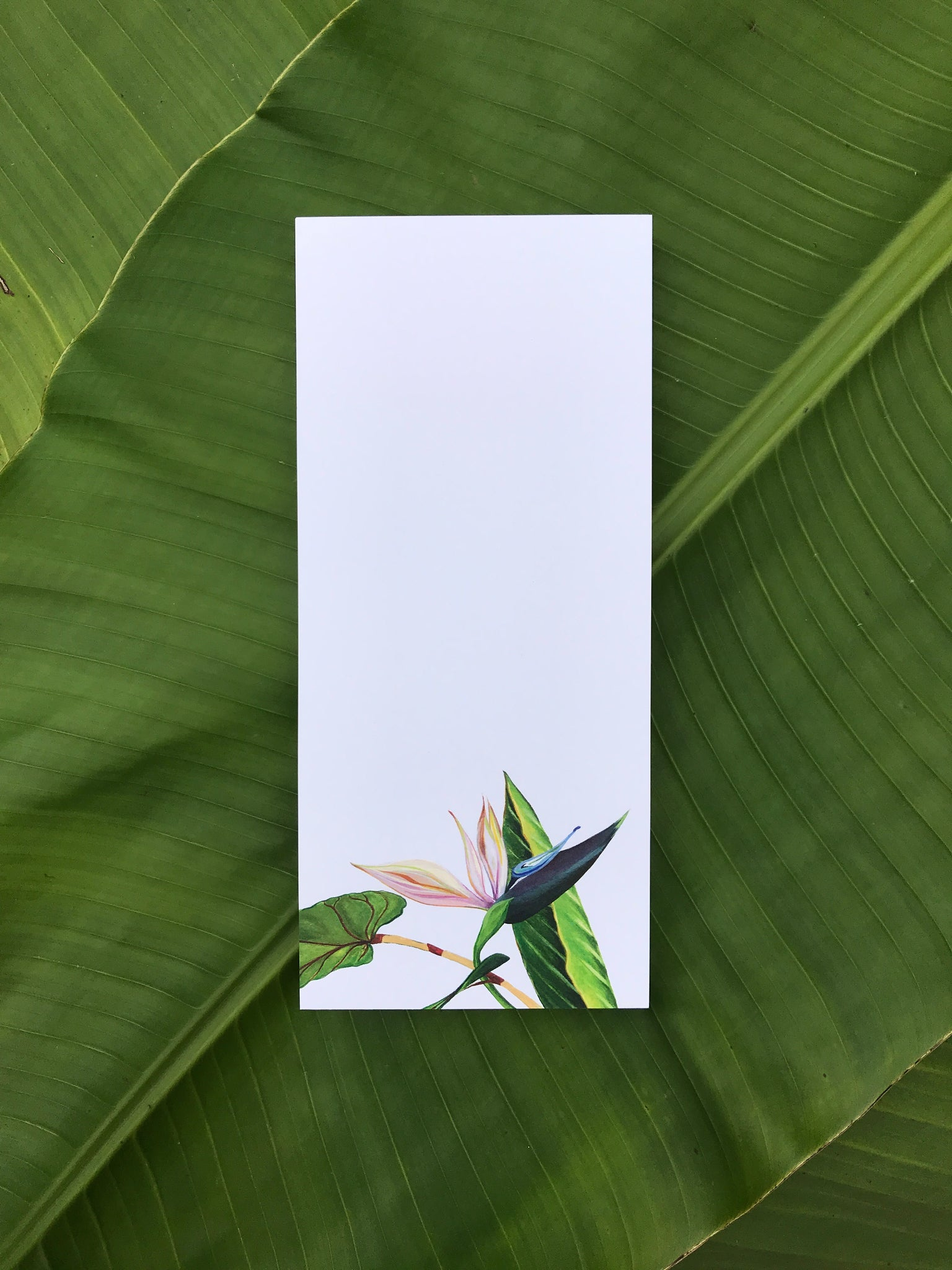 Bird of Paradise note pad