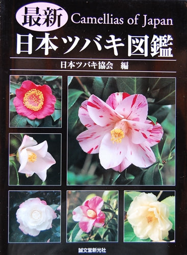 Camellia of Japan