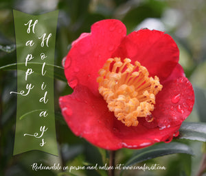 """Happy Holidays"" Gift Certificate from Camellia Forest Nursery"