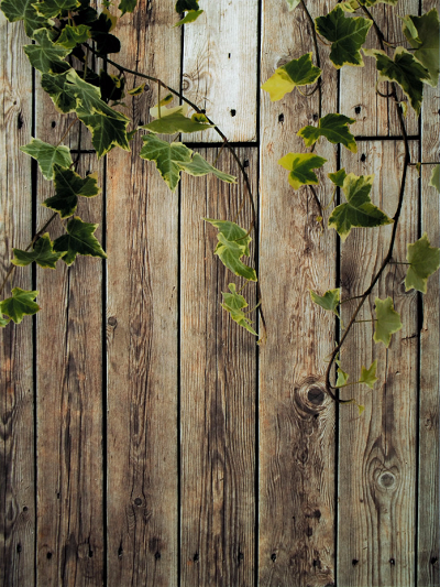 Katebackdrop:Kate Spring Scenery Wooden Wall With Leaves Backdrop