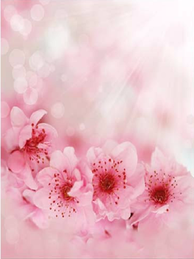 Katebackdrop:Kate Spring Scenery Pink Flowers Photograph Background
