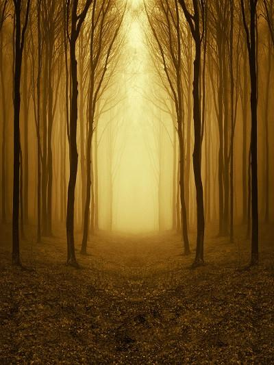 Laden Sie das Bild in den Galerie-Viewer, Katebackdrop:Kate Natural Brown Road With Forest Photography Backdrops