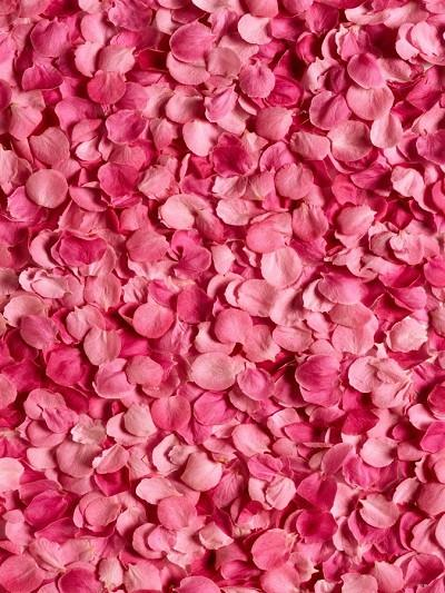 Katebackdrop:Kate Valentine'S Day Red Rose Petal Backdrops