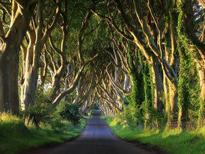 Katebackdrop£ºKate Green Big Trees Road Scenery Backgroud