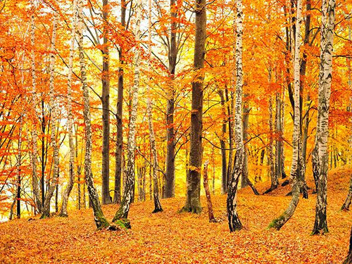 Katebackdrop:Kate Autumn Scenery Photography Backdrop Forest Photo Background