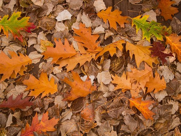 Katebackdrop:Kate Autumn Fallen Leaves Scene Photo Studio Props