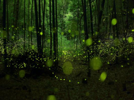 Katebackdrop:Kate Green Forest Light Spot Photography Backdrops