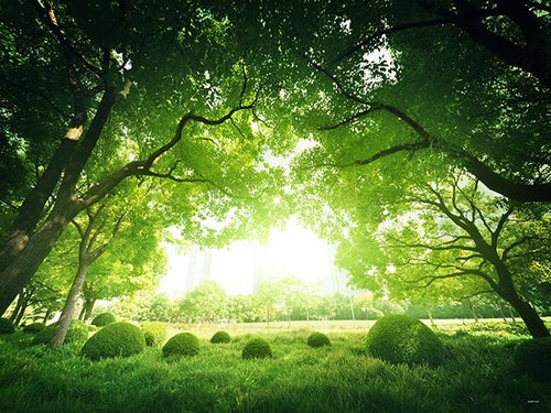 Katebackdrop:Kate Natural Backdrop Scenery Forest Night Background