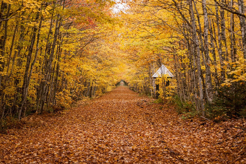 Katebackdrop:Kate fall Leaves Road Backdrop photos