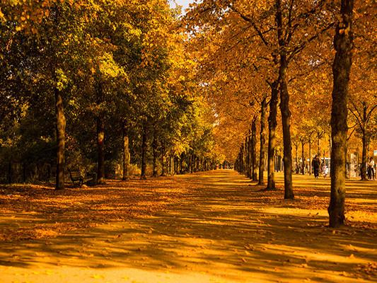 Katebackdrop:Kate Yellow Tree Forest Leaf Road Autumn Backdrops