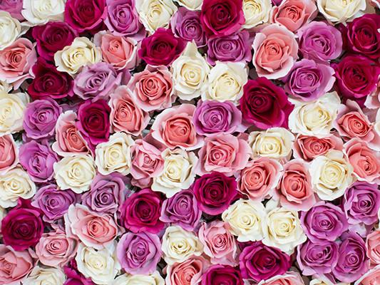 Katebackdrop:Kate Flower Red White Pink Backdrop Valentine's Day