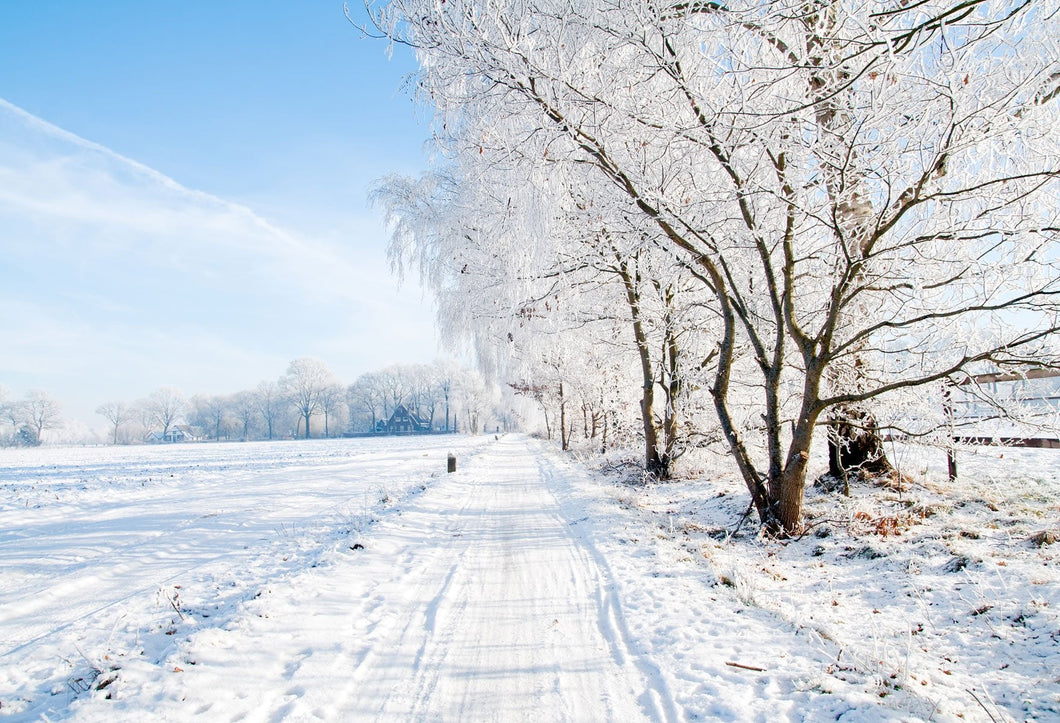 Katebackdrop:Kate Snowy Winter Trees Broad Field of Vision Backdrop for Photography