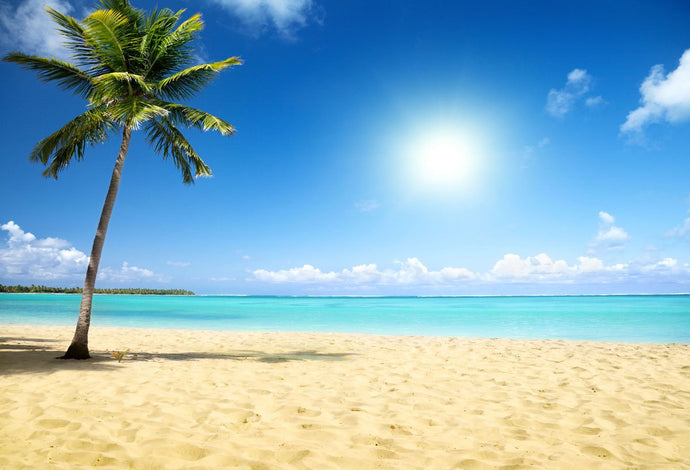 Katebackdrop£ºKate Blue Sky Sea Beach Summer Holiday Backdrop Coconut trees
