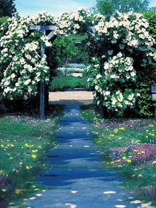 Katebackdrop:Kate Scenery Flower Door Wedding Outdoor Backdros For Pictures
