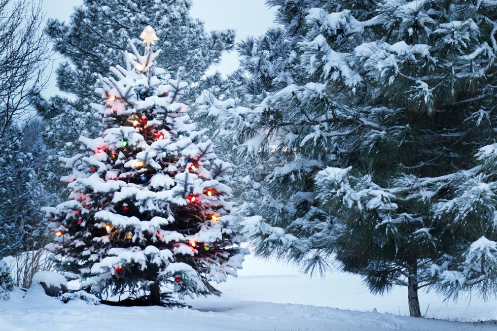 Katebackdrop:Kate Christmas Backdrop Winter Snow Forest Pine Background