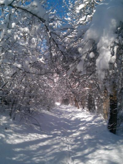 Katebackdrop:Kate Winter Scenery Snow Forest Photography Backdrop