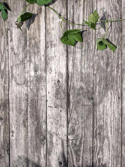 Katebackdrop:Kate Gray Wood Wall With Leaf Photography Backdrop