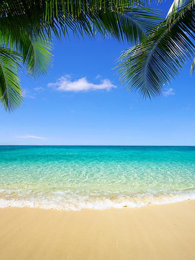 Katebackdrop:Kate Sea Beach Palm Tree Blue Cloud Background For Photography
