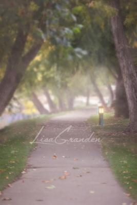 Katebackdrop£ºKate Foggy Path Backdrop Designed by Lisa Granden