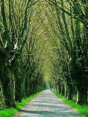 Katebackdrop:Kate Road Tree Spring Backdrop Scenery Backdrop For Photography