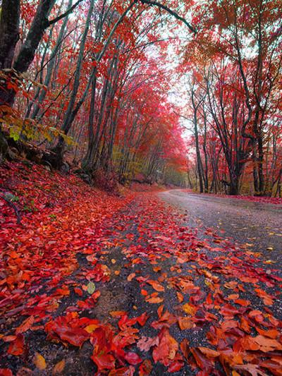 Katebackdrop:Kate Autumn Scenery Red Deciduous Leaves Photography Backdrop
