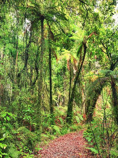 Katebackdrop:Kate Natural Scenery Tropical Rain Forest Backdrop