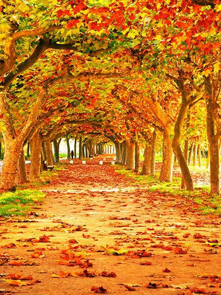 Katebackdrop:Kate Autumn Tree Fall Leaves Natural Scenic Photo Background