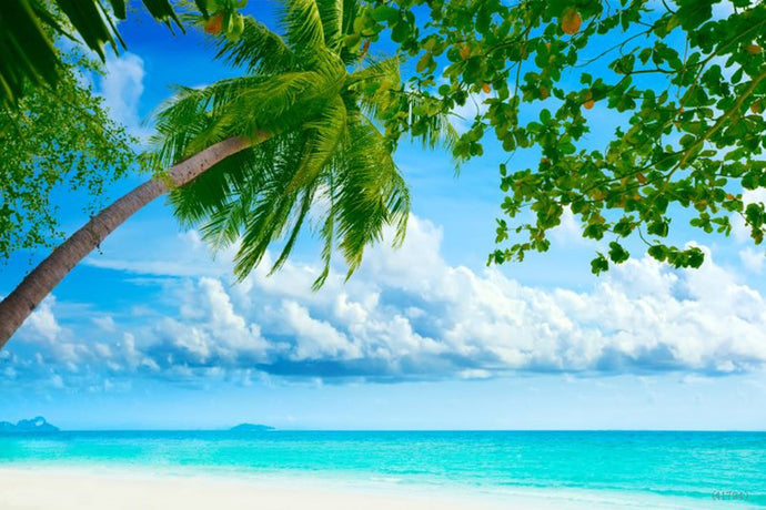 Katebackdrop:Beach Blue Sky Ocean Tree Backdrop for Summer Photography