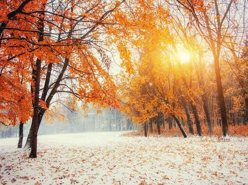 Katebackdrop:Kate Sunshine Winter Scenic Photography Backdrops Maple Leaves Tree