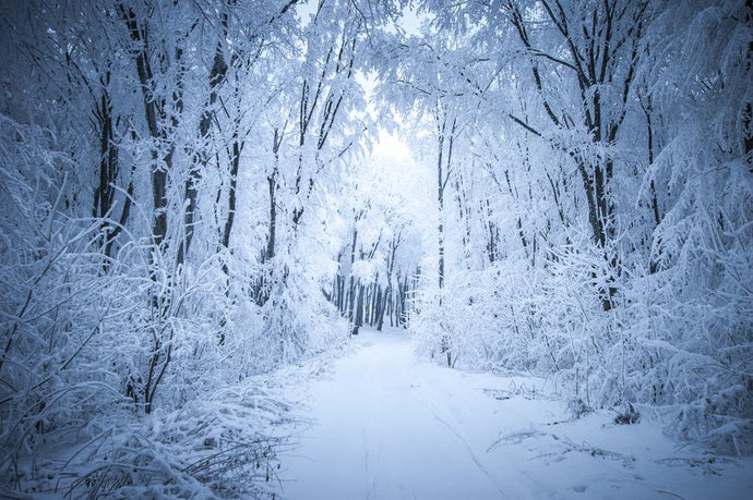 Katebackdrop:Kate Frozen snow forest road winter backdrop