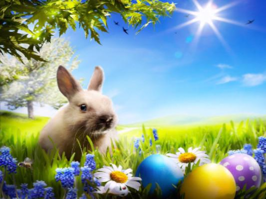 Katebackdrop:Kate Photography Background Rabbit Easter Eggs Photo Studio Backdrops Spring