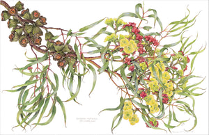 Eucalyptus erythrocorys, Red-capped gum