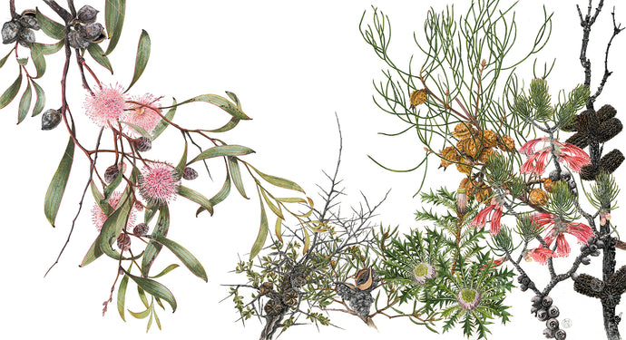 Winter Hakea & Sheoak