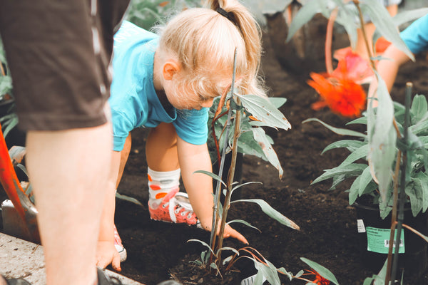 Little girl in blue shirt bent over holding planter.