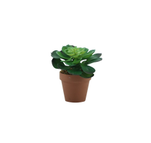 Load image into Gallery viewer, SUCCULENT-1