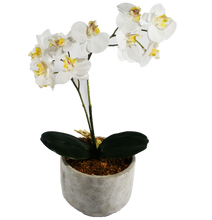 Load image into Gallery viewer, Cement Pot with Orchids