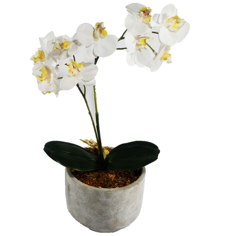 Cement Pot with Orchids