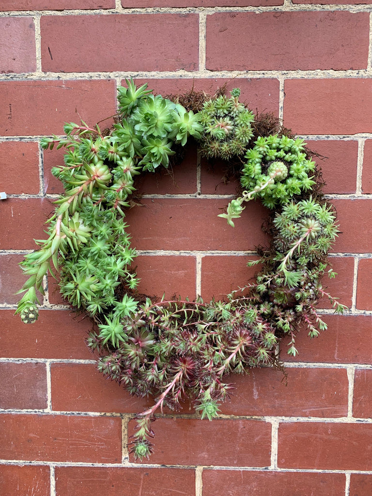 Make a Sempervivum Living Wreath Sunday 9th February 2020 11-1pm