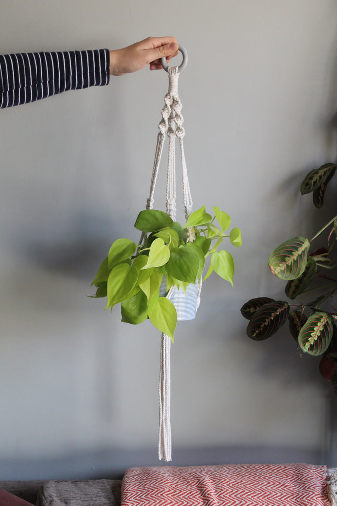 Macrame Plant hanger workshop Sunday 1st March 11.30am - 1pm
