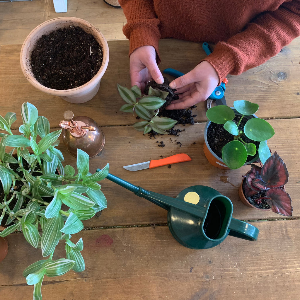House Plant Propagation and Care workshop 11-12.30pm Sunday 28th April