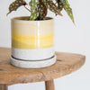 Bombastic yellow Glazed plant pot with saucer