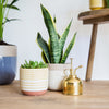 Terracotta plant pot - cream