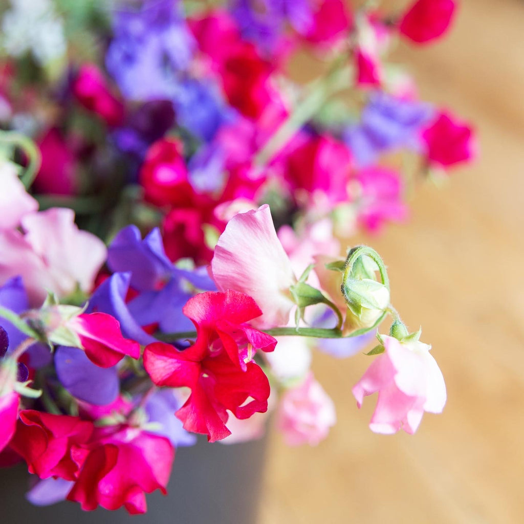 Tray of Northumbrian Flowers Sweet Peas mixed