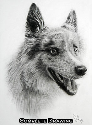 Custom detailed portrait drawings of people, pets and animals. Dog portrait drawing complete