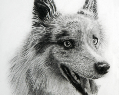 Custom detailed portrait drawings of people, pets and animals. Dog portrait drawing
