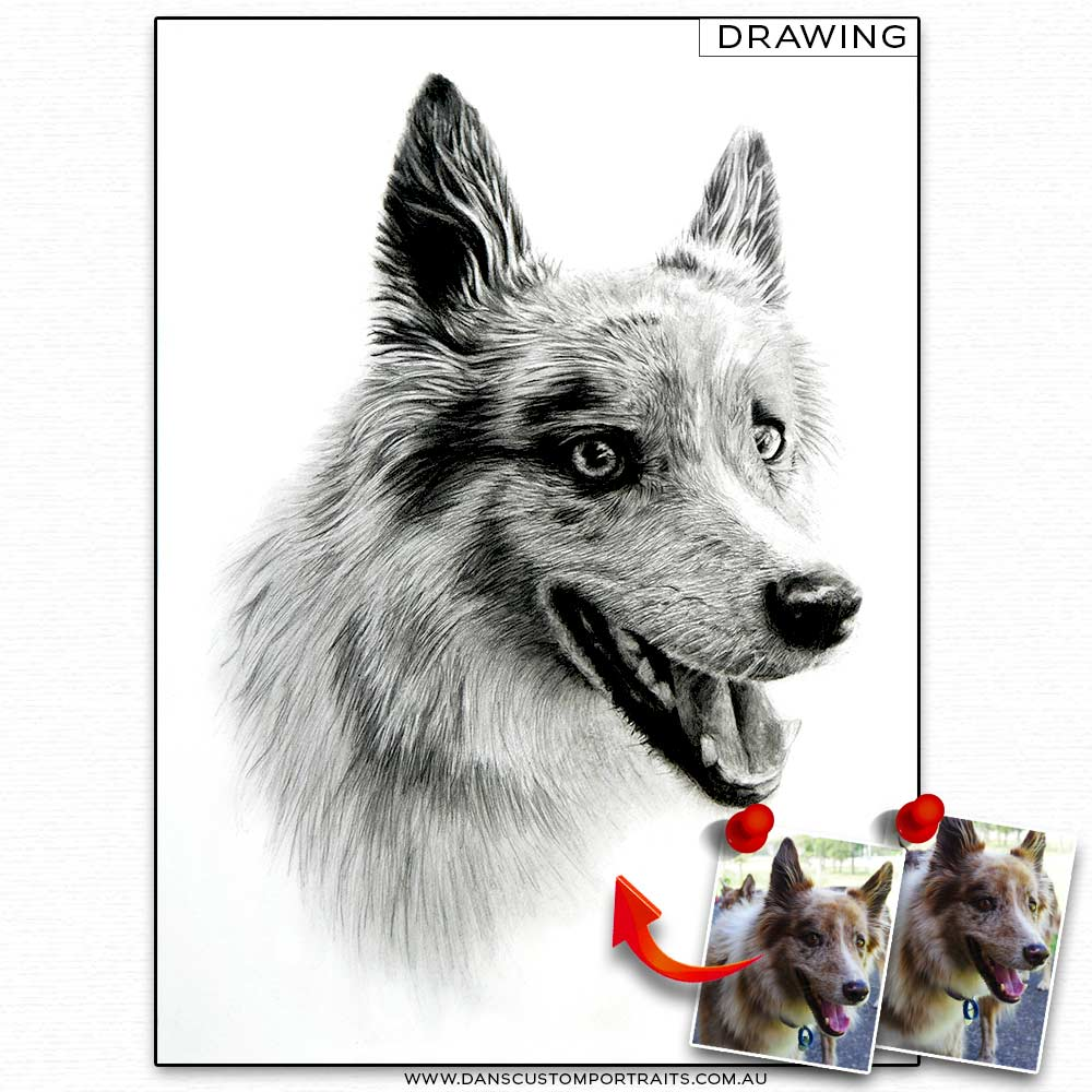 Realistic Detailed Custom Portrait Drawing Pet Dog